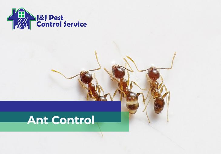 Ant Control Quezon City