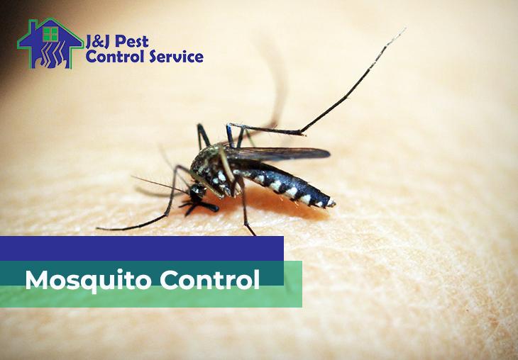 Mosquito Control Quezon City